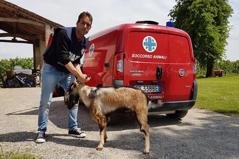 soccorso-animali-enpa-3